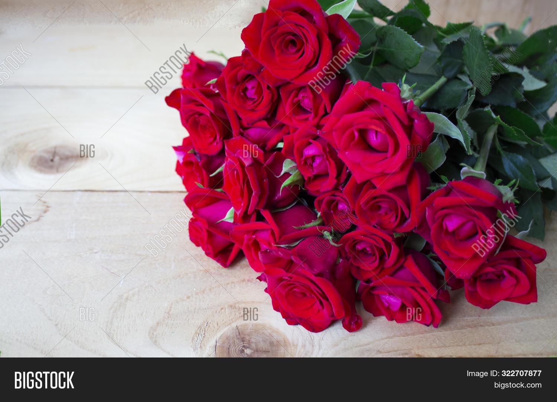 Beautiful Rose Flower In Garden. Rose Flower Background. Roses Flower Texture. Lovely Rose. Roses Fl