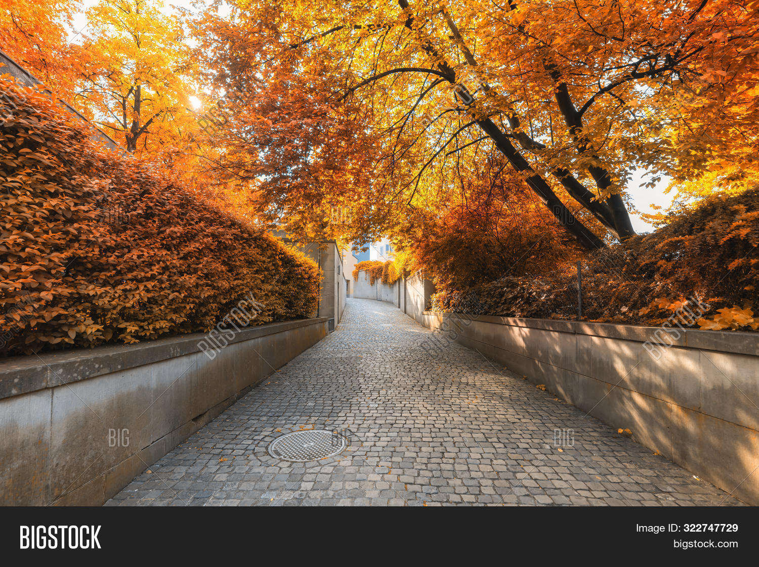 Lindenhof,October,activities,architecture,autumn,beautiful,branch,building,city,colorful,day,dry,environment,exterior,field,forest,garden,glowing,green,idyllic,landscape,leisure,lifestyles,morning,natural,nature,outdoors,park,path,pathway,plant,public,relax,relaxation,road,scenic,season,sunlight,swiss,switzerland,tourism,town,travel,tree,view,walk,walkway,warm,way,wood