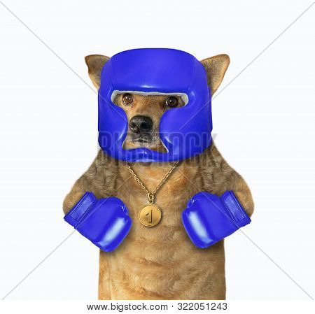The dog boxer is dressed in a boxing blue helmet and gloves. White background. Isolated. stock photo