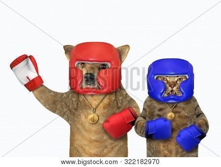 The dog and the cat in boxing clothes are standing together. White background. Isolated. stock photo