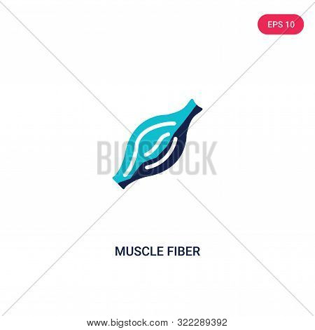 muscle fiber icon in two color design style. stock photo
