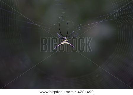 A deadly poisonous spider in the Ecuadorian Amazon  stock photo