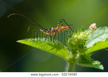 A yellow black and white Assassin Bug from West Africa waiting for prey on top of a plant stock photo