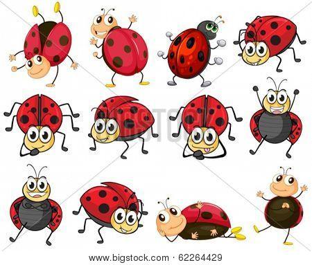 Illustration of the cute ladybugs on a white background stock photo