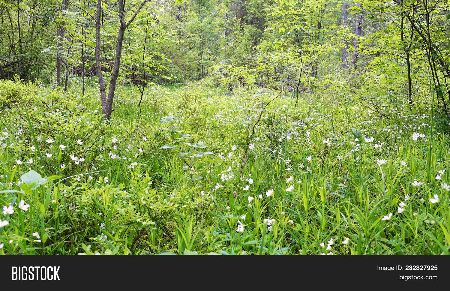 beautiful wild flowers and grass in a forest glade beautiful allergen izmirmasajfo