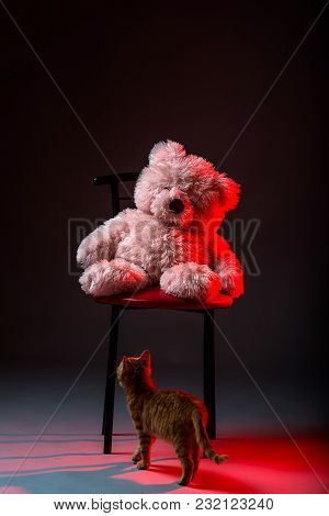 Pink bear sitting in a chair. Small red kitten and a teddy bear on a gray background. stock photo