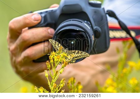Beautiful Swallowtail butterfly on yellow flower photography by wildlife photographer from short distance stock photo