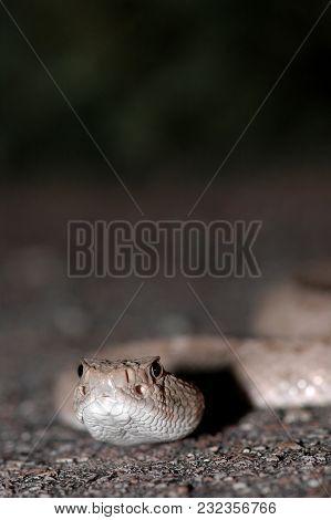A close macro image of a western diamondback rattlesnake showing the heat sensor pits. stock photo