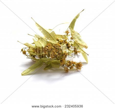 Dried Tilia flowers isolated on white background stock photo