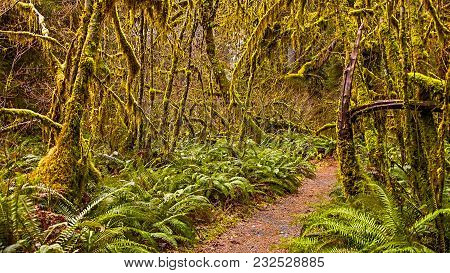 Hall of Mosses in the Hoh Rainforest at Olympic national Park, Washington, USA stock photo