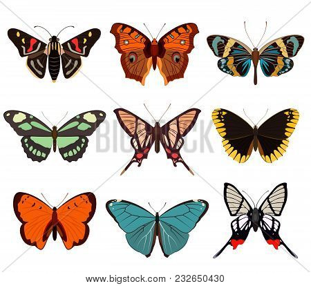Realistic butterfly and moth collection isolated on white background vector illustration. Colorful cartoon swallowtail icon set, tropical butterfly design logo. Zoology, biology and exotic wildlife stock photo