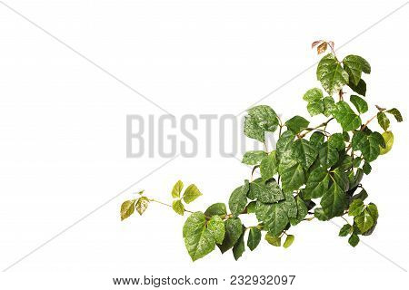 Sprig of homemade wicker green lianas isolated on white stock photo