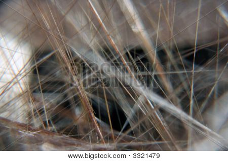 A close up isolated shot of the insides of an rutile quartz stone stock photo