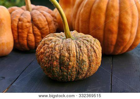 Warted pumpkin close up, Cucurbita moschata squash. stock photo
