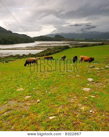 Grazing lands after the storm Arthur's Pass National Park New Zealand