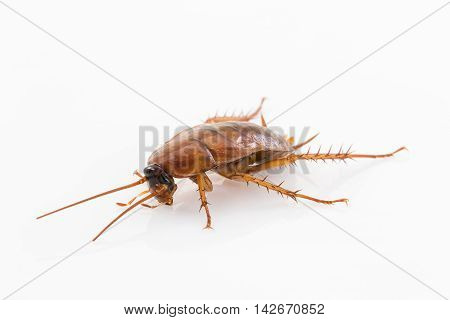Close up dead cockroach isolated on white background stock photo
