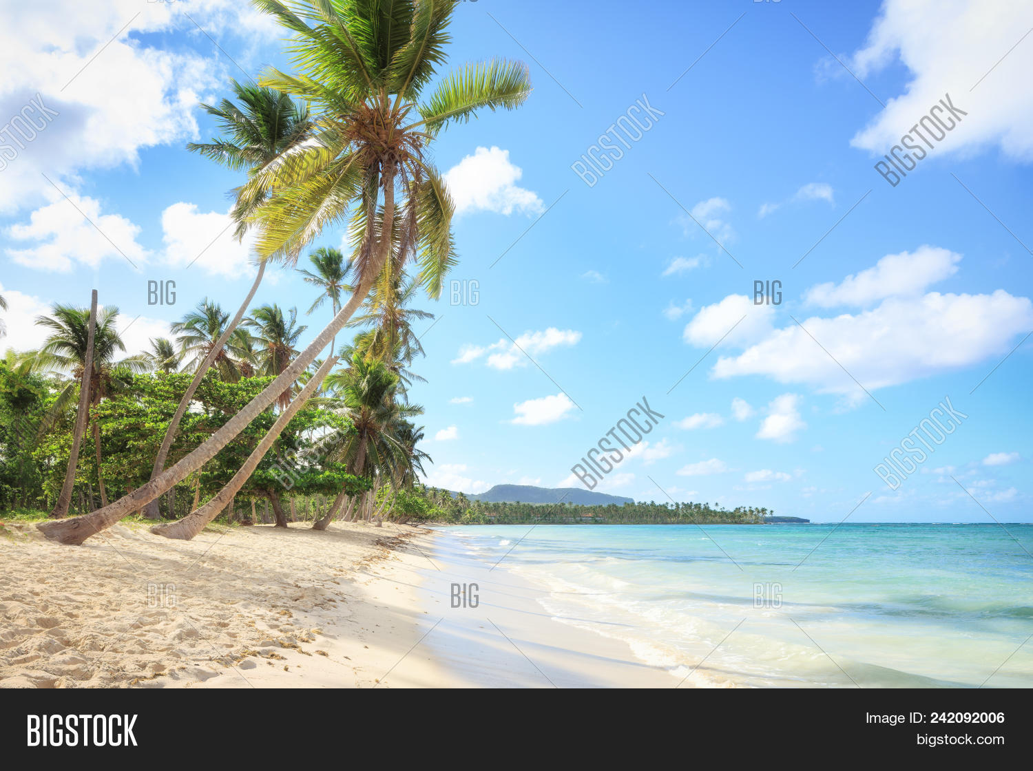 🔥 Panorama Of Secluded Beach Of, Las Galeras, Dominican Republic