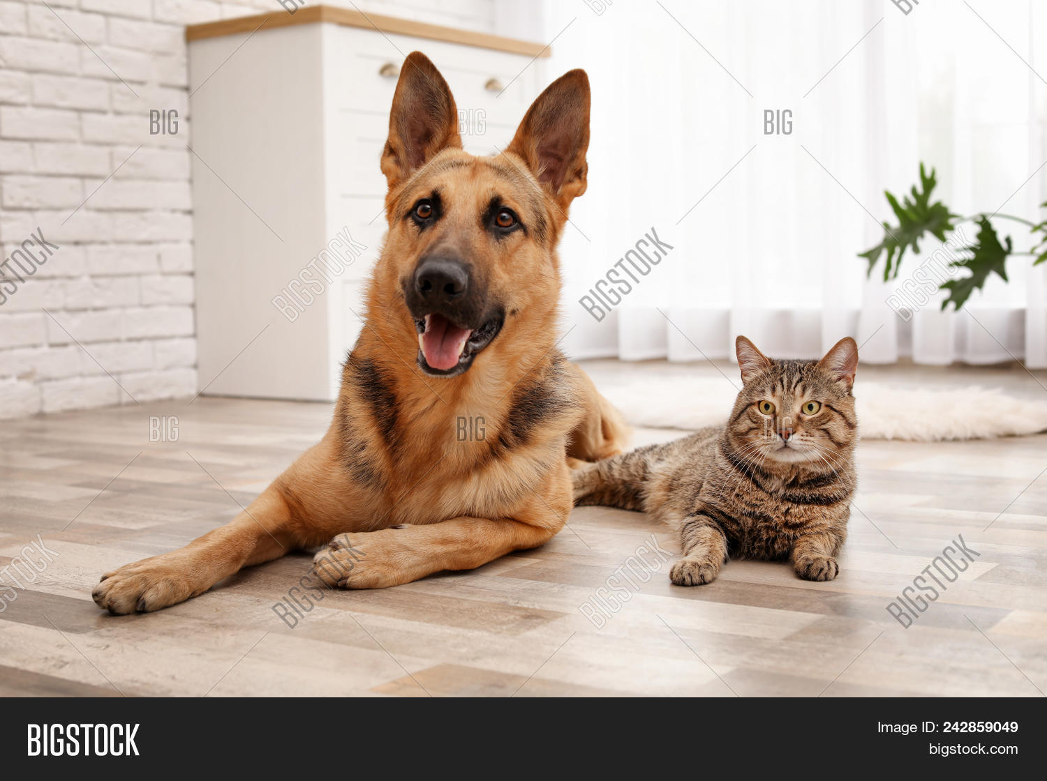 Adorable Cat And Dog Resting Together At Home Animal Friendship 242859049 Image Stock Photo
