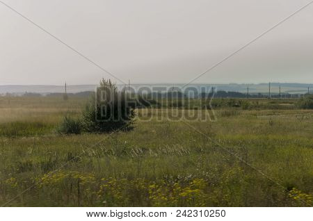 Gold meadow with green trees far away and blue sky. Calm summer. Cultivated area. Agriculture. Yellow grass Good weather. Travelling stock photo