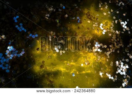 the flower petals float in the water. the liquid is old and stagnant. the reservoir is partly in the shade, partly in the sun stock photo