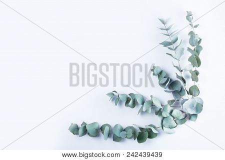 Green floral composition with silver eucalyptus on white background with copy space. Healing Herbs for cards, wedding invitation, posters, save the date or greeting design. stock photo