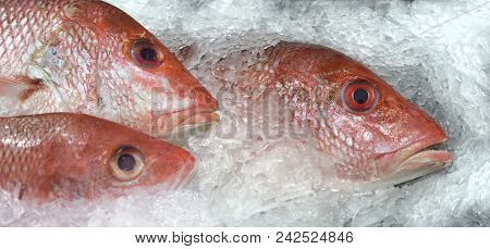 Red snapper sea fish on an ice bed for sale at market stock photo