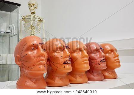Five plastic human heads with cosmetology marking on table with cabinet and skeleton on background. stock photo