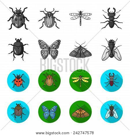 Wrecker, parasite, nature, butterfly .Insects set collection icons in monochrome, flat style vector symbol stock illustration . stock photo