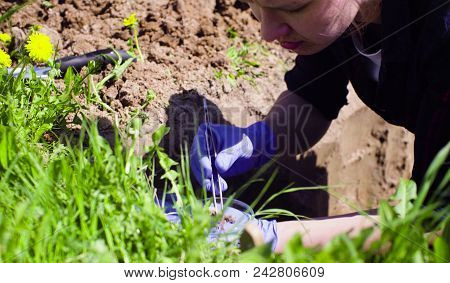 Scientist ecologist on the meadow taking samples of the soil and putting them in the petri dish. stock photo
