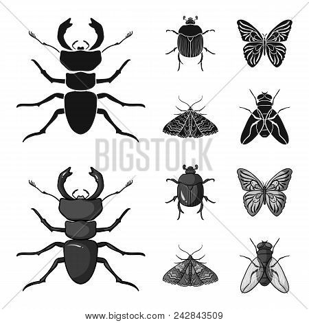 Wrecker, parasite, nature, butterfly .Insects set collection icons in black, monochrom style vector symbol stock illustration . stock photo