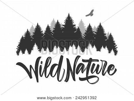 Vector Illustration: Hand Drawn Type Lettering Of Wild Nature With Silhouette Of Pine Forest And Haw