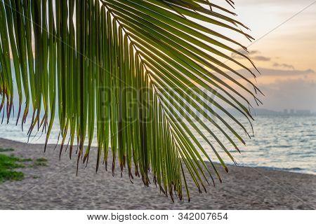 A big Cocos nucifera palm leaf is on the beach orange sunrise sky background stock photo