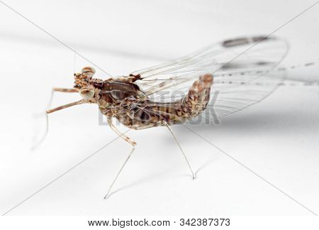 Macro Photography of Mayfly on White Floor stock photo