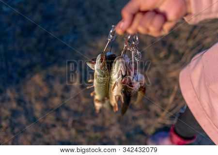 The girl by the hand of the angler holding a lot of fish pike hanging Fish Stringer face. stock photo