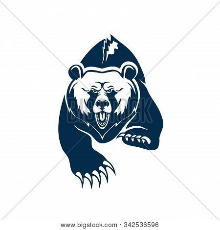 Wild american black bear isolated grizzly. Vector aggressive animal, big claws on paws stock photo