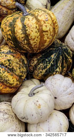 Fresh healthy bio pumpkins on farmer agricultural market at autumn. Healthy food. Pumpkin is traditional vegetable used on American holidays - Halloween and Thanksgiving Day. stock photo