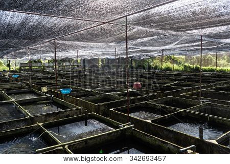 Ornamental Fish Farm in Asia. Farm nursery Ornamental fish freshwater in Recirculating Aquaculture System in cement pond square box are many and roof of house covered shading net light filter is lifestyle Countryside stock photo
