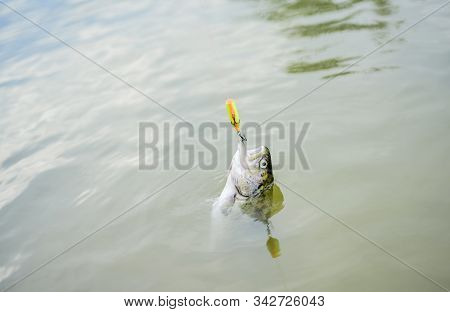 trout bait. catch fish. fall into the trap. fishing on lake. Good catch. fly fishing trout. recreation and leisure. hobby sport activity. fish on hook. stalemate and hopelessness. Hunger go figure stock photo