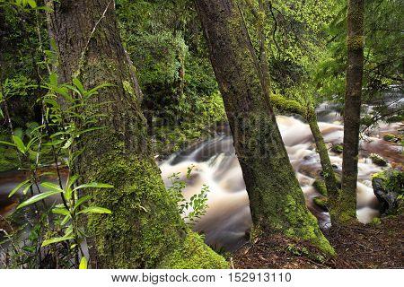 Newell creek is a magnificent fast running stream in Tasmania, Australia stock photo