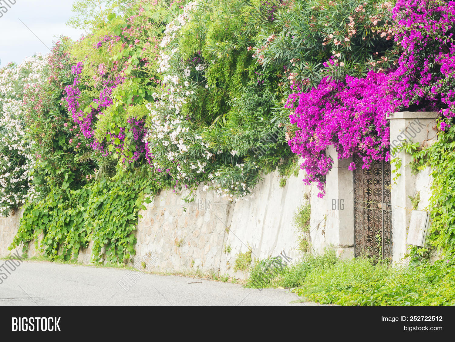 aegean,alley,architectural,architecture,background,balcony,beautiful,beauty,bloom,blooming,blossom,bougainvillea,branch,bright,building,bush,color,colorful,culture,decoration,door,europe,flora,floral,flower,garden,greece,greek,green,house,leaf,magenta,mediterranean,natural,nature,petal,pink,plant,purple,red,spring,summer,tourism,town,traditional,travel,tree,tropical,white,window