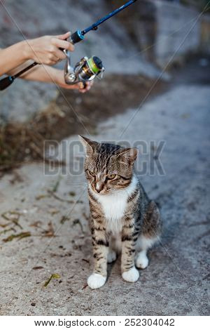 cat and fisherman with fishing rod wheel stock photo