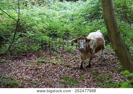 Staring cow in the forest. Green woods and bushes at background stock photo