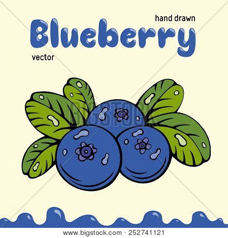 Blueberry vector illustration, berries images. Doodle Blueberry vector illustration in blue and green color. Blueberry berries images for menu, package design. Vector berries images of blueberry stock photo