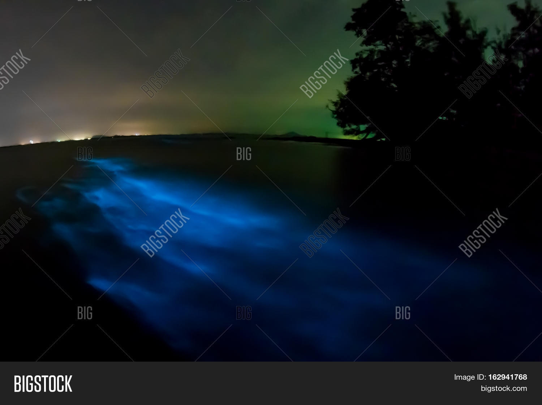 Bioluminescent Plankton Glowi 162941768 Image Stock