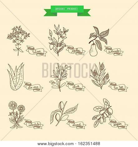 Vector illustration of a plant - aloe vera, tutsan, lavender, jojoba, almond, olive, klendula, tea tree, argan, cocoa, avocado, Ylang-Ylang, clove. plants collection. stock photo