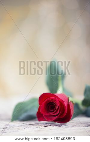 Love background with red rose-Dishwasher Magnet Skin (size 24x24)