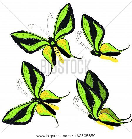 set Ornithoptera paradisea butterfly wings of a bird of paradise vector illustration stock photo