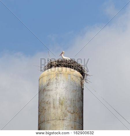 Stork on a roof of a water tower. Stork nest. stock photo