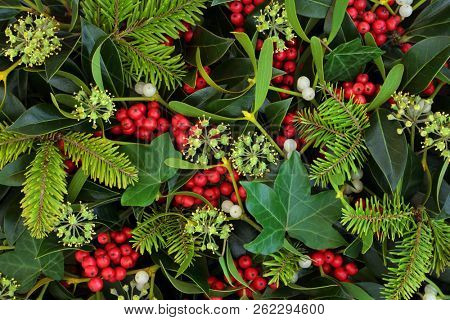 Holly, ivy and mistletoe Christmas and winter greenery background. Traditional Christmas greeting ca
