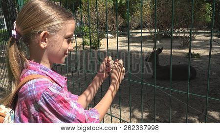 Child in Zoo Park, Girl Watching Deer, Kids Love Nursing Animals, Pets Care stock photo